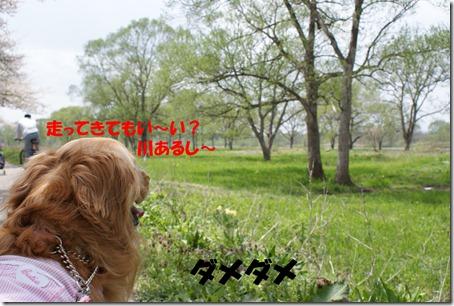 2011_0504_111319-DSC04035