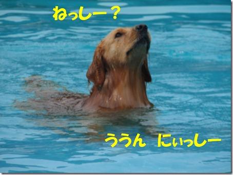 2011_0611_145141-P6110060