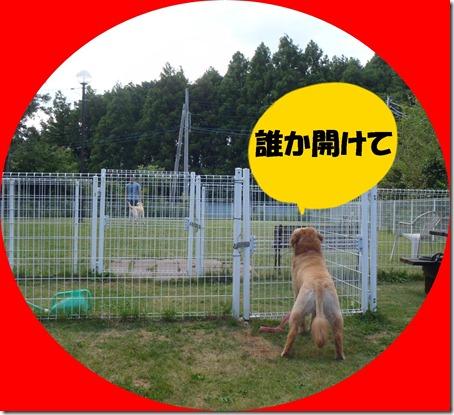 2012_0610_154048-P6100096-crop