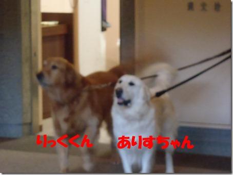2012_0708_173809-P7080088