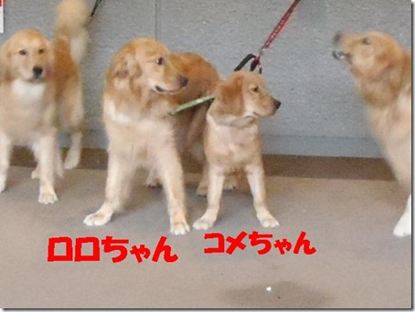 2012_0708_173913-P7080110